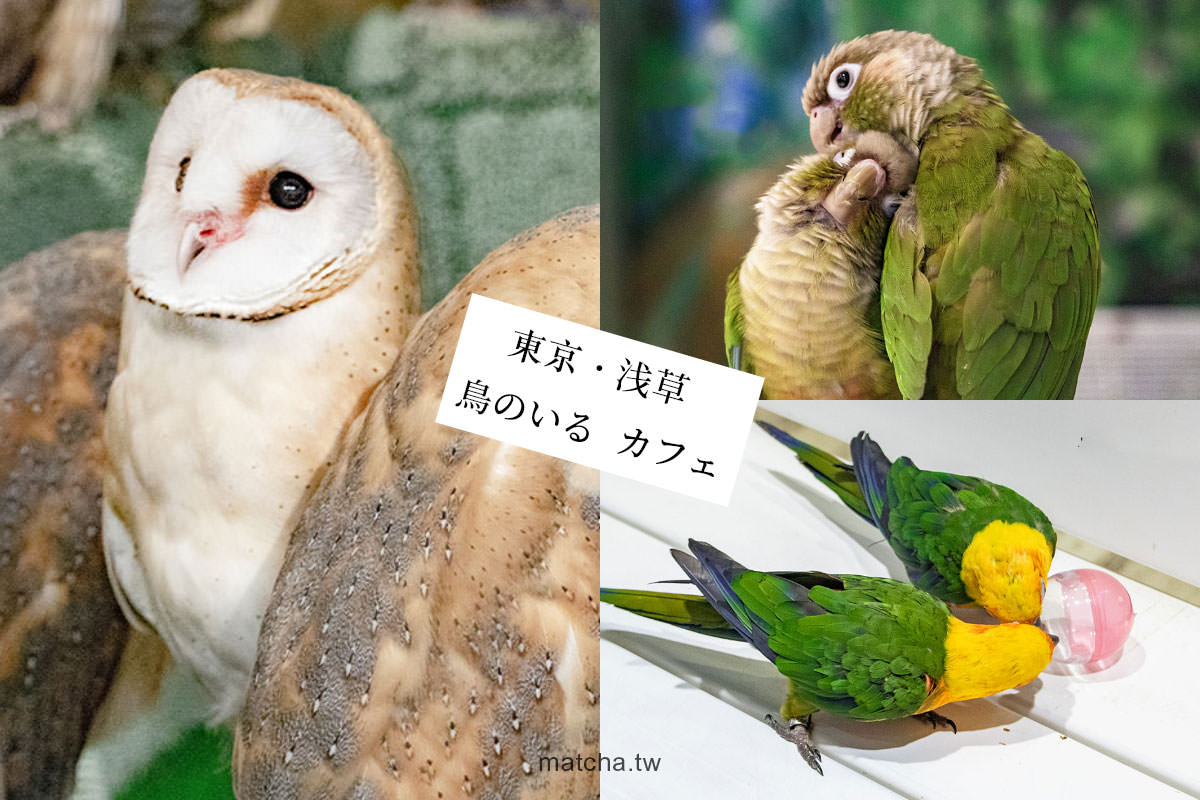 在東京與鸚鵡互動|鳥のいる カフェ 浅草店。和鸚鵡們度過一個歡樂的下午吧!