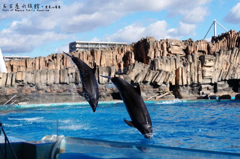 【日本名古屋景點】日本名古屋-名古屋港水族館Port of Nagoya Public Aquarium。大小朋友都愛前往的知性景點